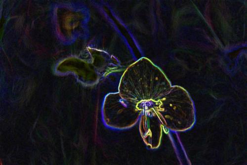 Wildblumenstaude Blau