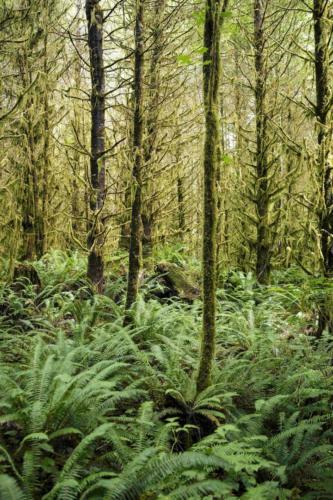 Regenwald Vancouver Island